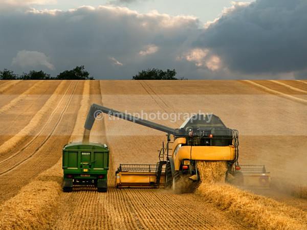 Harvest Time. - Yorkshire Countryside