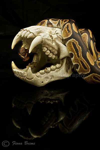 Mica 2 - Reptile Photography