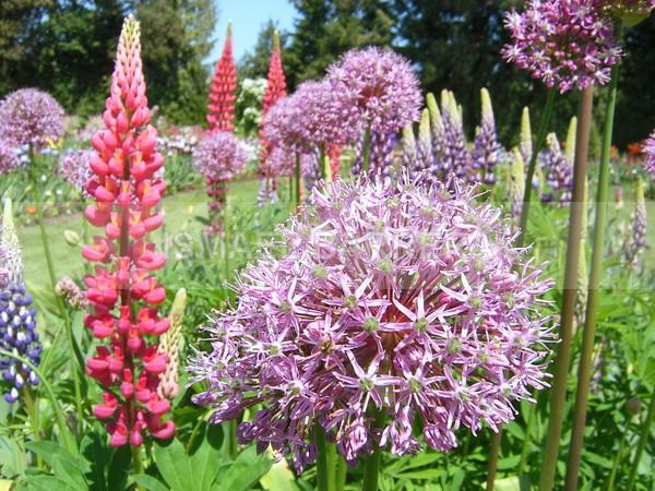 Garden - FLORAL