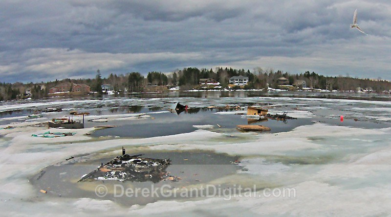 Ice Shack Debris - Kennebecasis River Rothesay NB - Ice Shacks