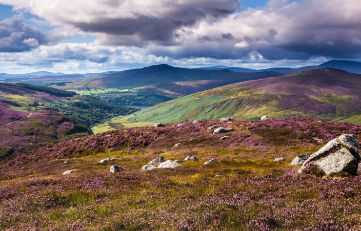 Mountains and Heather - Landscapes of Ireland - Glendalough and the Wicklow Mountains