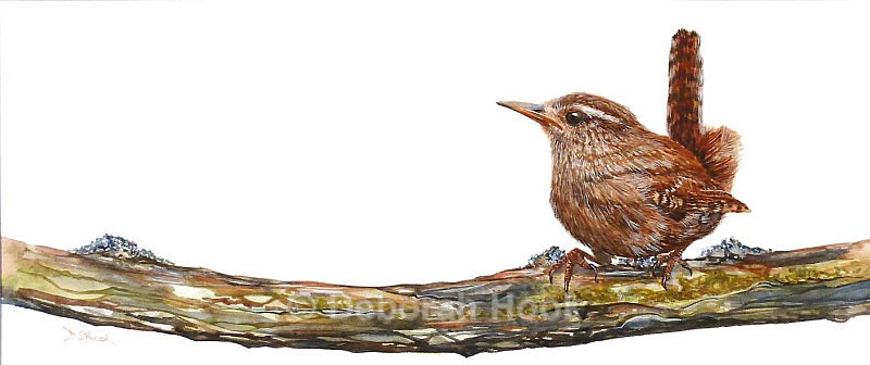 Wren on a Branch - Birds