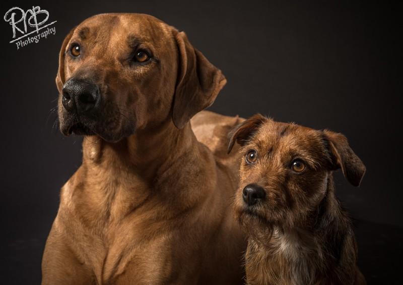 - Pet Portraits