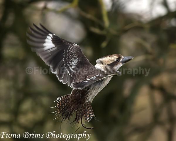 wow oct 3-13 - Birds of Prey