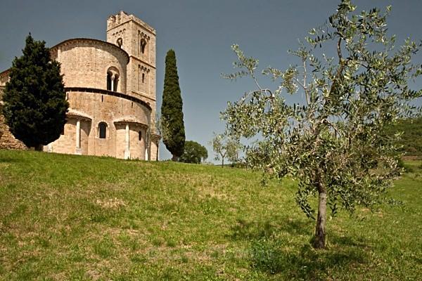 chapel and olive tree - Tuscany