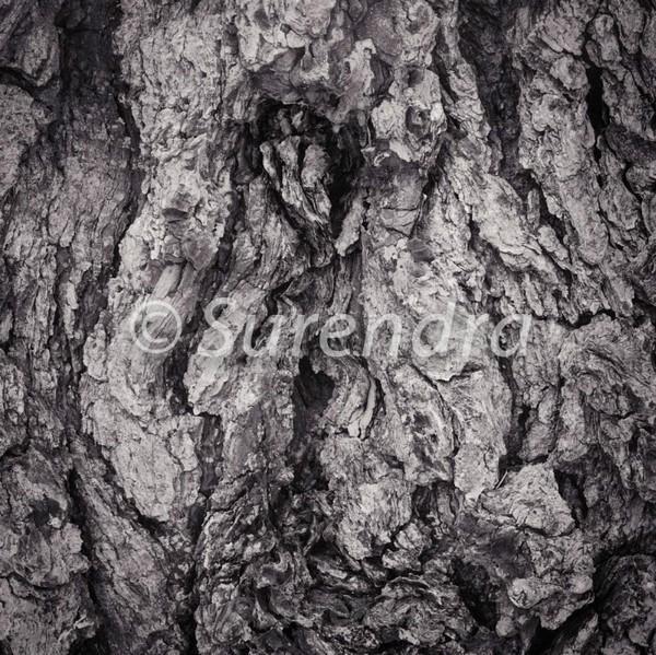 Bark # 27D - Bark Series 1 樹皮