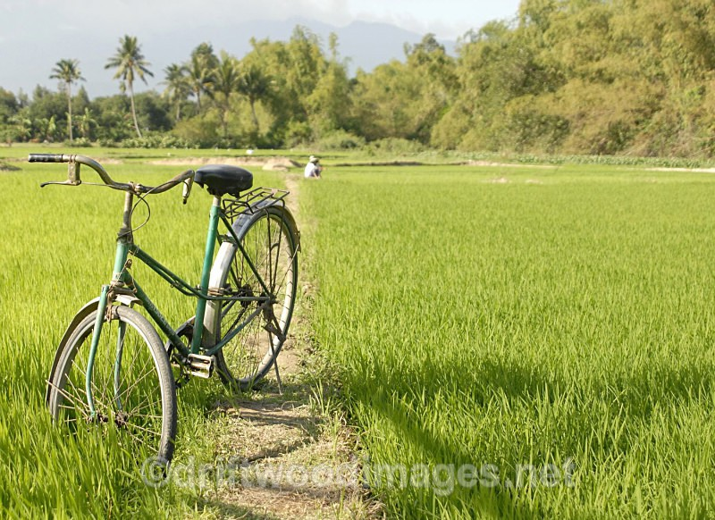 Bicycle and rice field Nha Trang, Vietnam - South East Asia