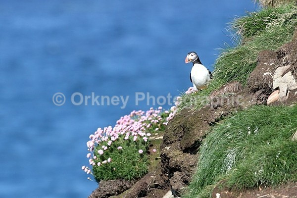puffin2813 - Orkney Images