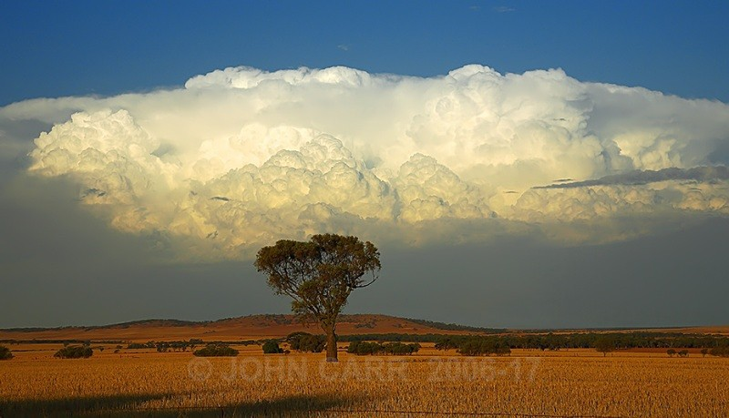 Tree & Cloud - THE STARS AND STORMY WEATHER PHOTOS