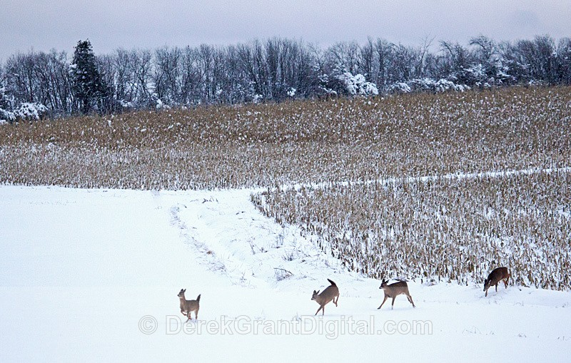 Dashing through the Snow - Winterscape