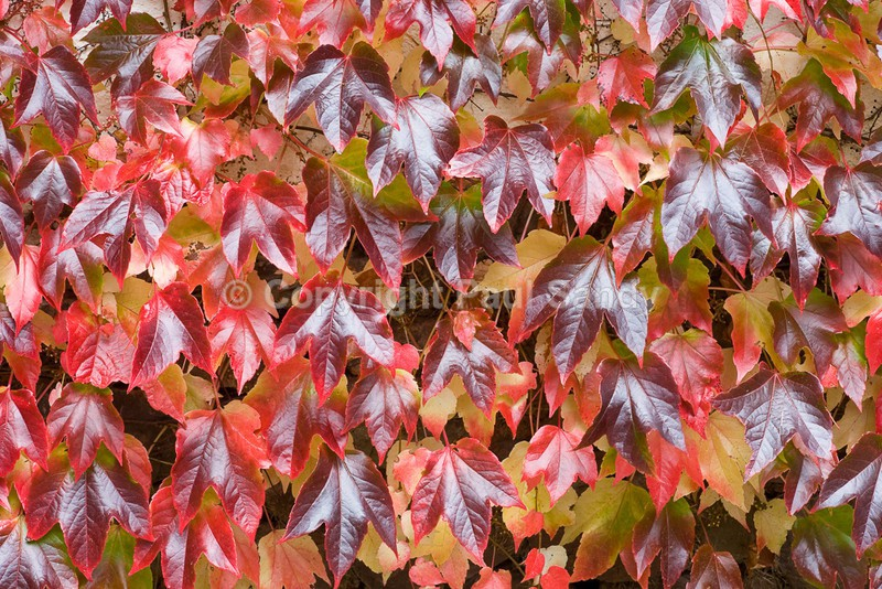 Autumn Foliage, Upton Hellions, Devon - Featured Images