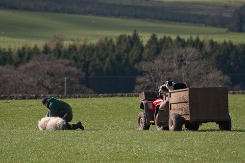 1 - The Lambing