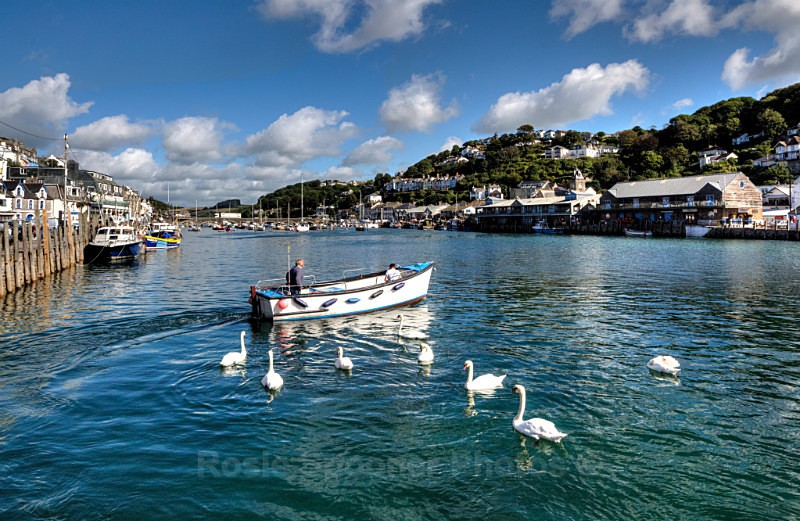 LO53 -Swans following the ferryman across the River Looe - Greetings Cards Looe