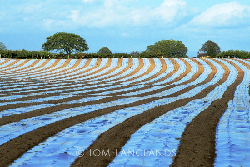 Undulating Stripes - Landscapes