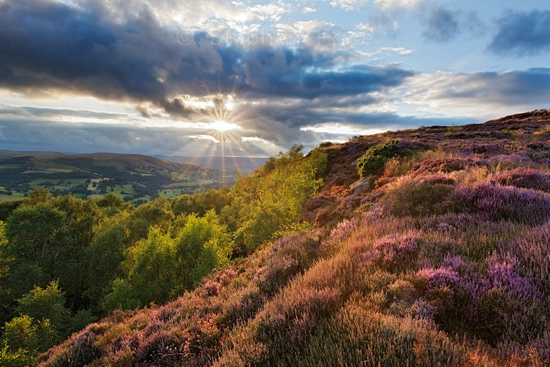 Millstone Edge Sunset | Peak District Heather Photo