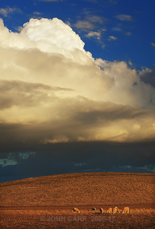 Grazing Sheep & Storm Clouds-5282 - COUNTRY SCENES PHOTOS