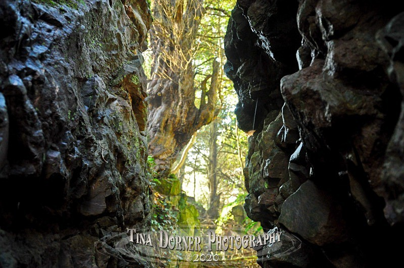 View of Yew Tree through rock walls. from Autumn Forest of Dean and Wye Valley Portfolio by Tina Dorner Photography