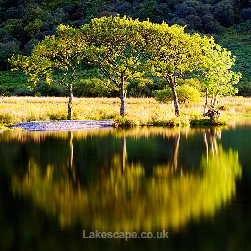 Summer Trees_4122 - Trees