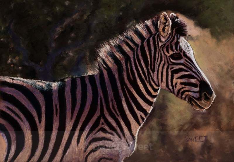 Zebra - Paintings