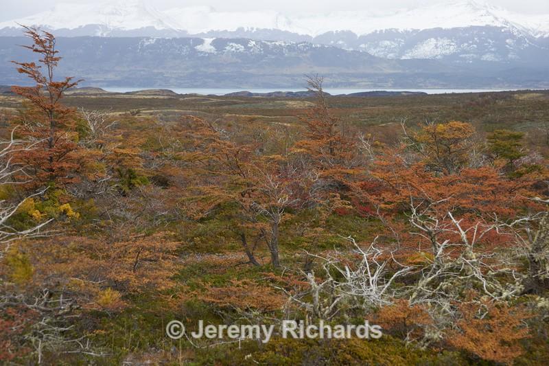 Autumn in Patagonia - Torres del Paine National Park