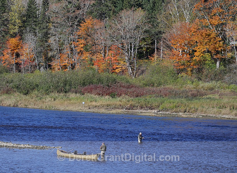 Fly Fishing on the Miramichi - 3 - Sport & Recreation