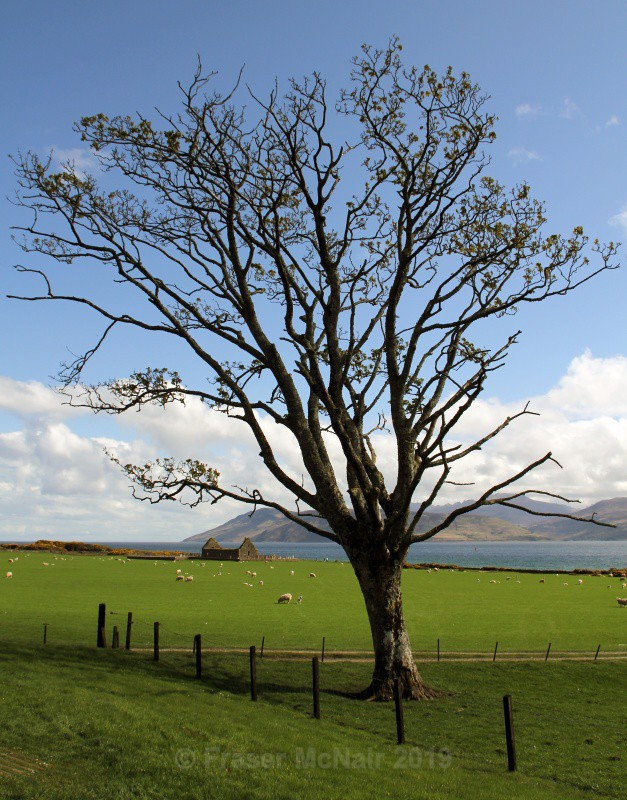 Skipness Chapel Tree_5890 - Landscape