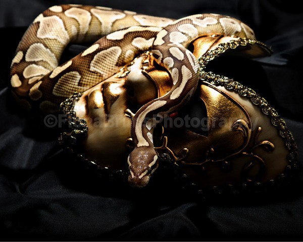 snakies-1 - Reptile Photography