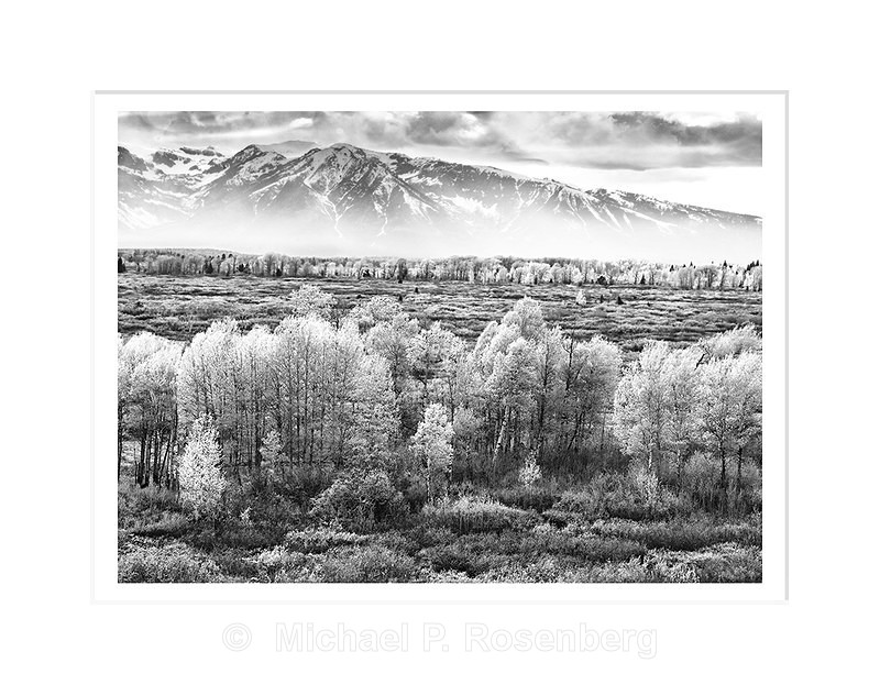 Spring Aspens and the Grand Teton Range, WY - Yellowstone and Grand Tetons