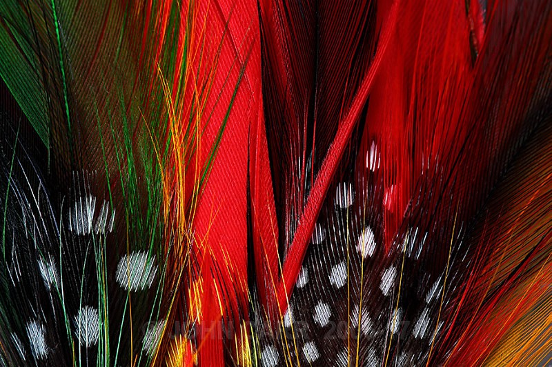FEATHERS-2-3915 - ABSTRACT DETAIL/CLOSE UP PHOTOS