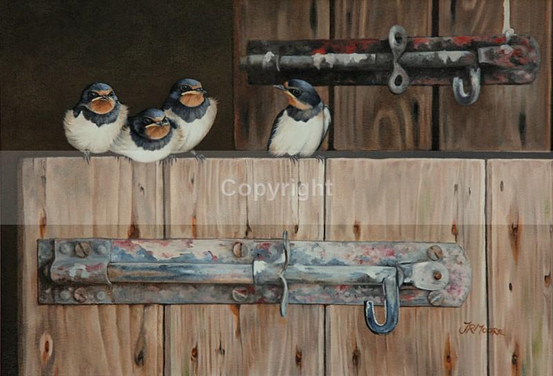 'YOU FIRST' - Birds
