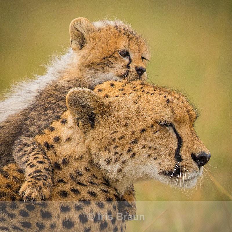 Kiss - Cheetah