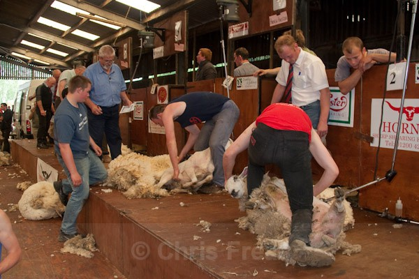 11 - Shearing Competition