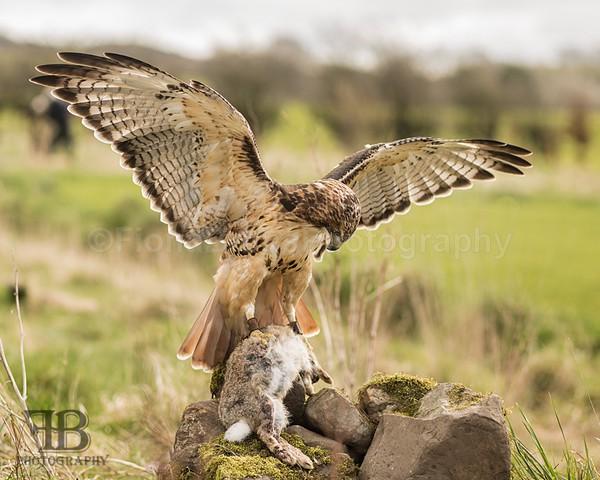 wow apr pd-28 - Birds of Prey