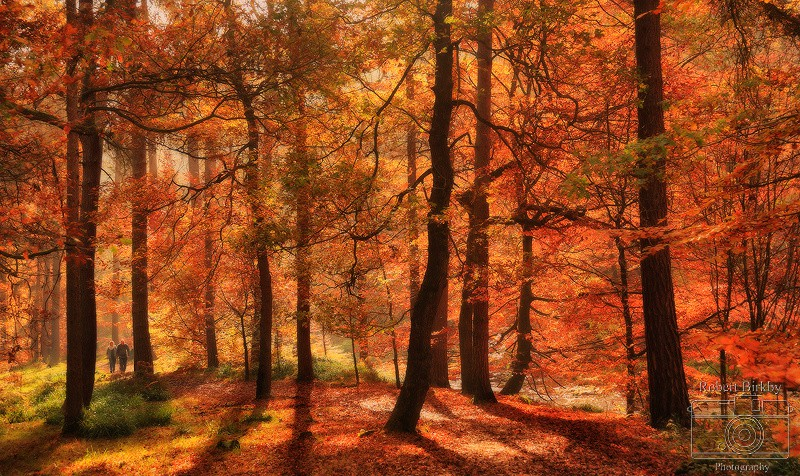 Walking through Autumn - Calderdale Landscapes