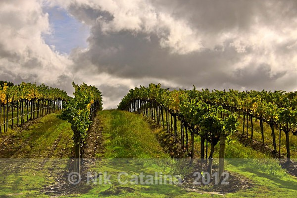 Storm Sky Vineyard - Landscapes