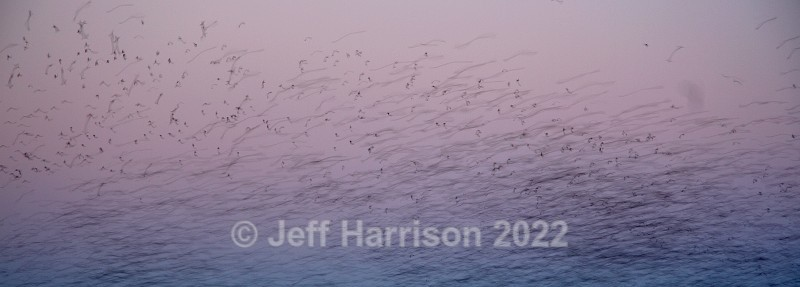A 'murmuration' of Starlings (image Abstract 06) - Abstract