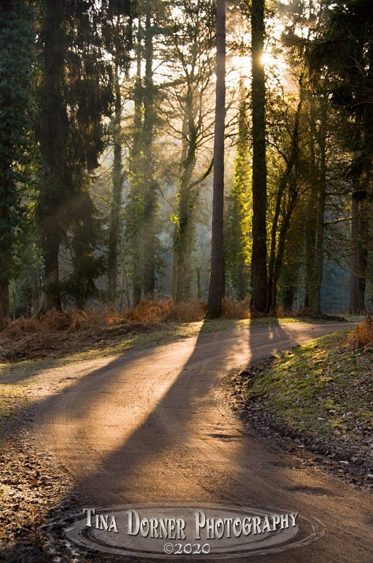 Morning Shadows on the Track by Tina Dorner Photography, Forest of Dean and Wye Valley, Gloucestershire