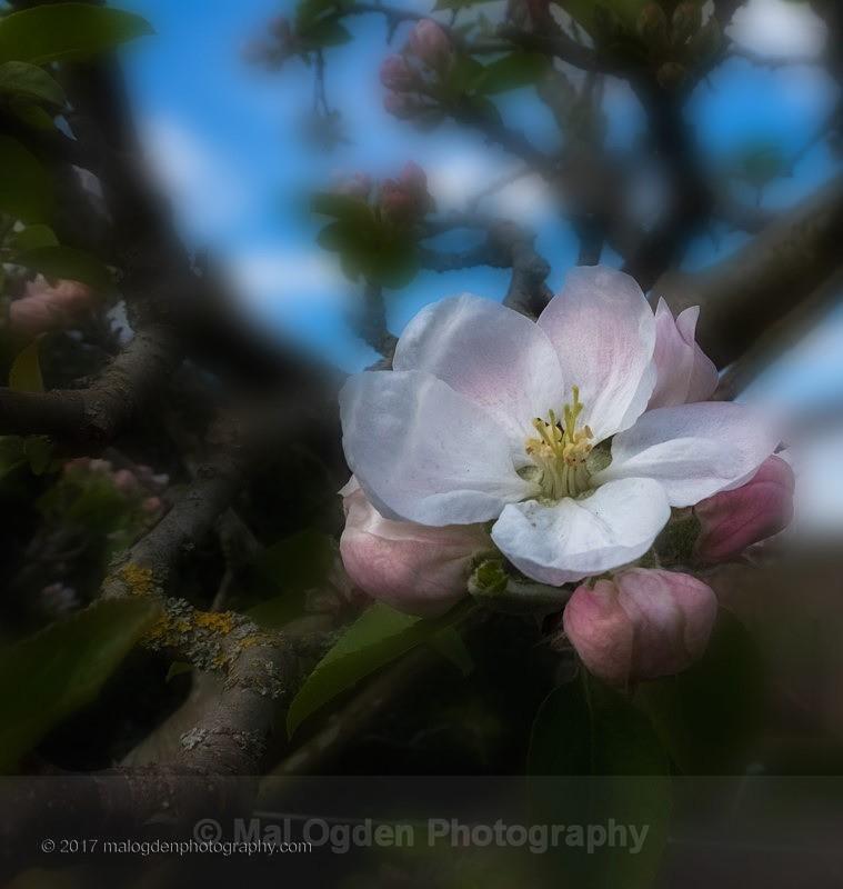 Blossom Time - Flora & Fauna