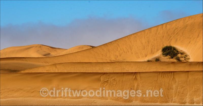 Namibia desert DSC_0052 Living Desert dunes and bush 3 A - Namibia, Southern Africa