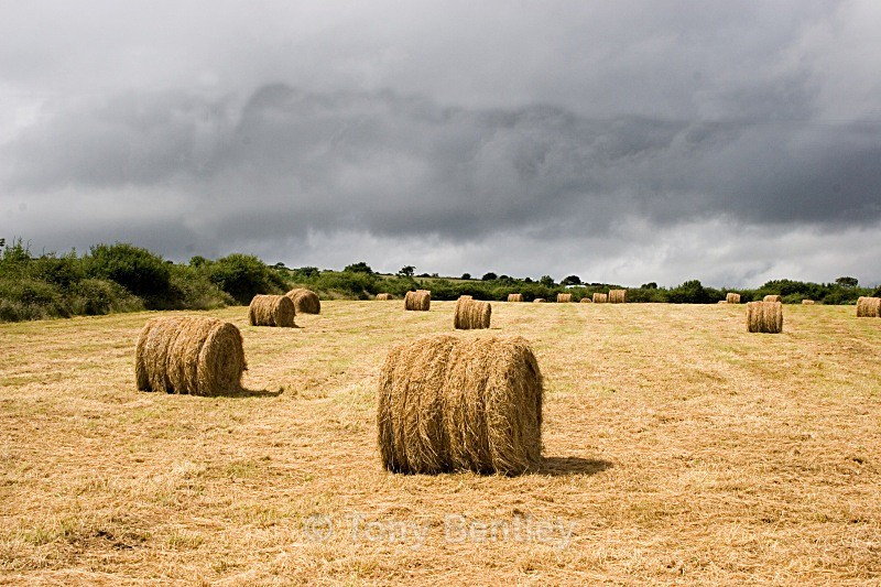 After the Harvest - Ireland
