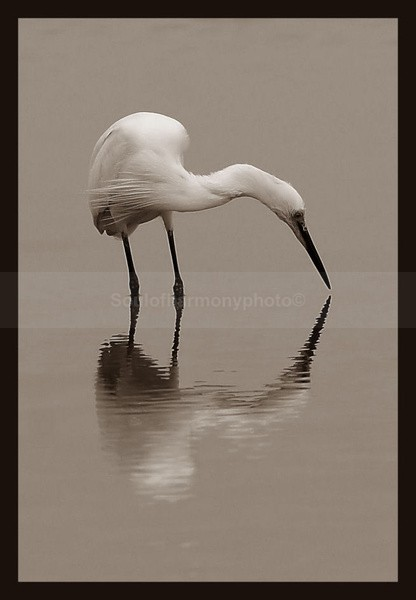 Harmony Of Nature - Art And Nature