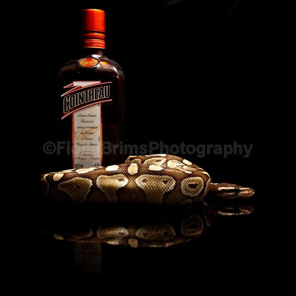 snakes-2 - Reptile Photography