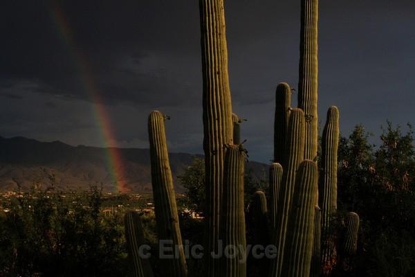 Saguaro Rainbow - Tuscon, Arizona