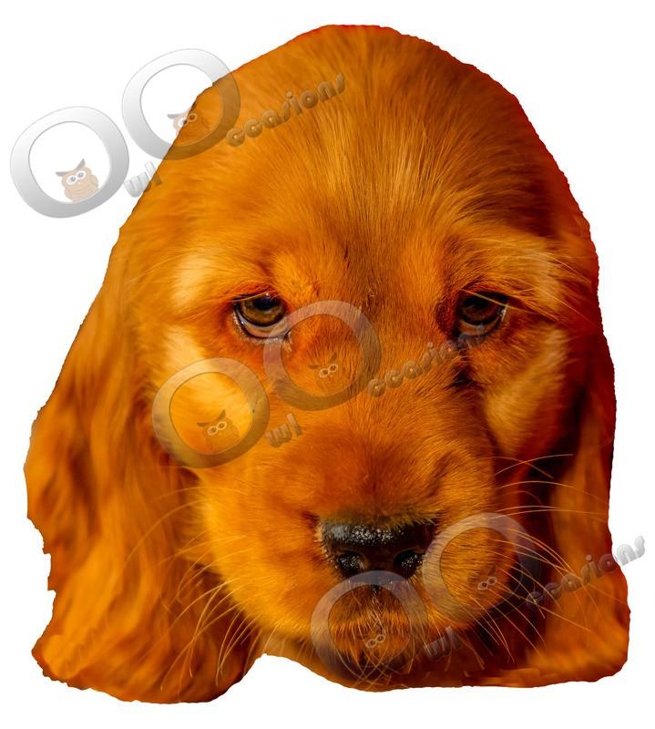 Golden Cocker spaniel Puppy-IMG_0052 - Pet Photography