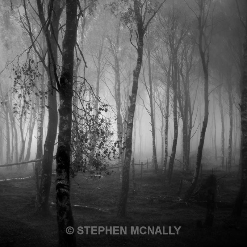Autumn mist - Landscapes