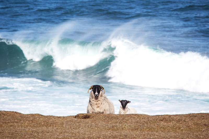 Sheep and Surf - Ireland by Day