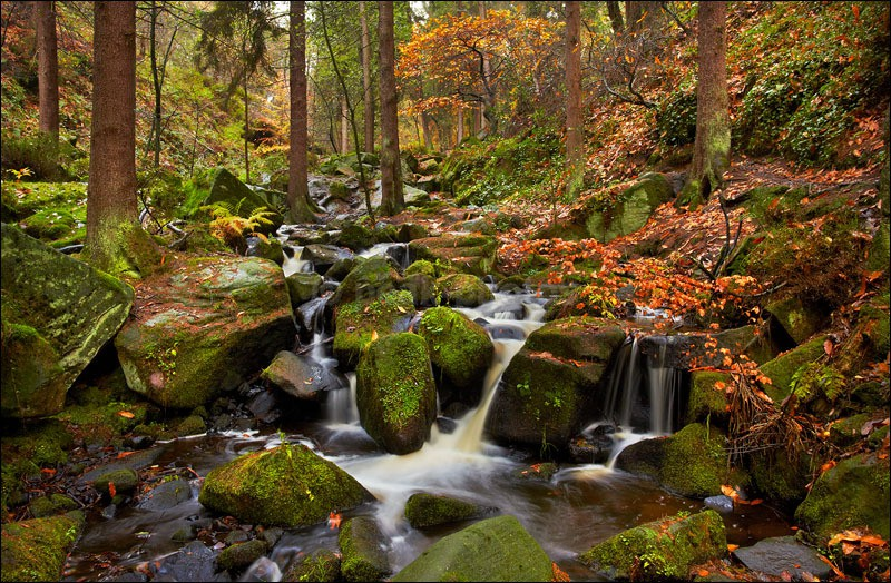 Autumn in Wyming Brook - Photographs of Woodland & Rivers