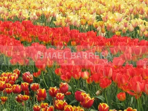 Spring - FLORAL