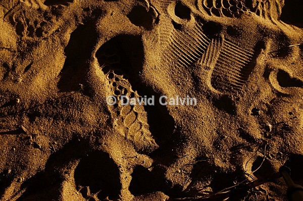Footprints In The Sand - Nocturnal