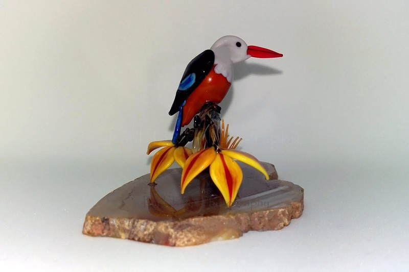 Grey headed kingfisher - The art of glass